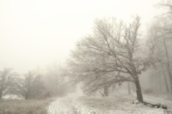 Mysterious winter foggy landscape. Broad leaf trees in fog, gloomy creepy landscape, glaze ice and rime, snow.