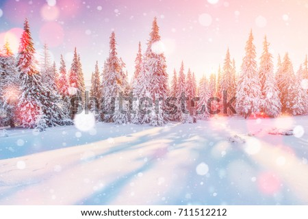 Shutterstock Mysterious winter landscape majestic mountains in winter. Magical winter snow covered tree. Photo greeting card. Bokeh light effect, soft filter. Carpathian. Ukraine. Europe