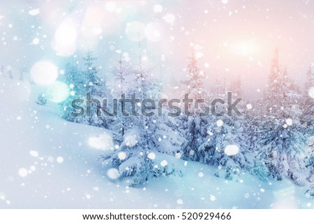 Mysterious winter landscape majestic mountains with snow covered tree. Photo greeting card. Bokeh light effect, soft filter. Carpathian. Ukraine. Europe