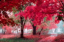 mystery autumn alley in the deep forest. natural background