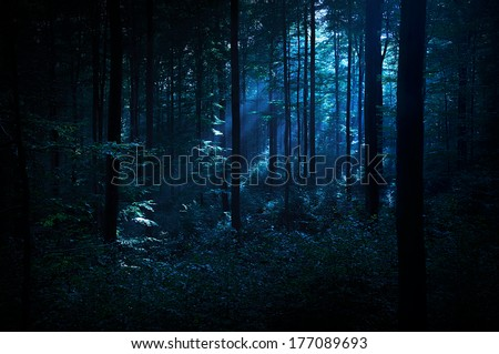 Mystery forest #177089693