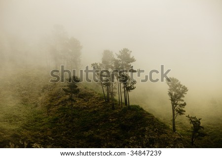 Mystery forest (Fog in a Madeiran forest)