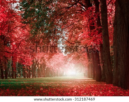 mystery romantic alley in a park with colorful trees, autumn landscape, natural background