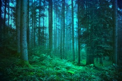 Mystic blue and green seasonal foggy fairytale forest.