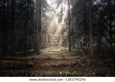 Mystic clearing in the woods