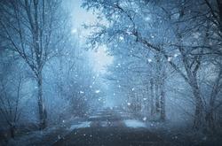 Mystic fantasy scene a foggy day in the nature