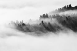 Mystic foggy forest