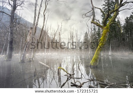 Mystic foggy swamp with dead trees