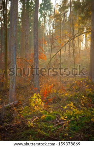 Mystic forest scene in autumn, south germany