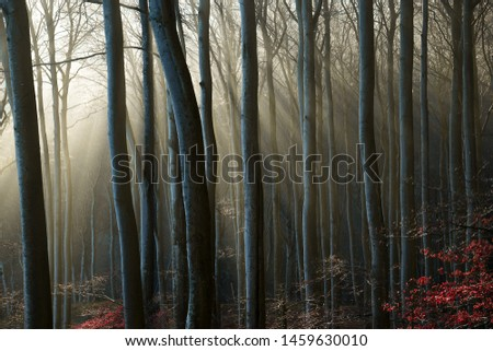Mystic forest with sunbeams breaking through the trees #1459630010