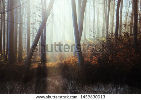 Mystic forest with sunbeams breaking through the trees #1459630013