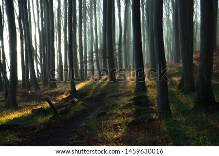 Mystic forest with sunbeams breaking through the trees #1459630016
