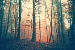 Mystic light and color autumn forest. Vintage filter effect used.