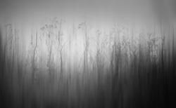 mystic mist monochrome forest