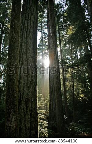 Mystic rainforest in Pacific Rim National Park near Tofino, BC, Canada