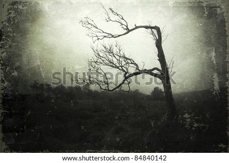 mystic skeletal tree in a foggy landscape overlaid with a grunge texture