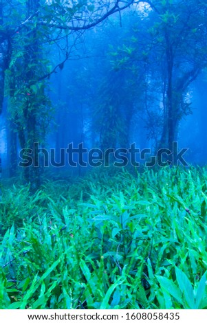 Mystic tropical rainforest in blue misty, gently blue fog covered ancient forest. Khao Yai National Park, Thailand, UNESCO World Heritage Site. Long exposure. stock photo