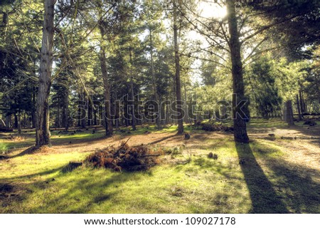 Mystic woods in autumn. Beautiful nature shot. Great light among the trees.