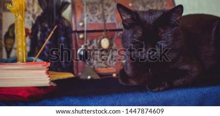 Mystical atmosphere with black cat and tarot card on the table, esoteric concept, fortune telling and predictions