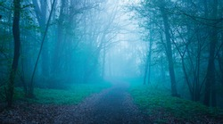 Mystical autumn forest with trail in blue fog. Beautiful landscape with trees, path, fog. Nature background. Foggy forest. Fairy Forest.