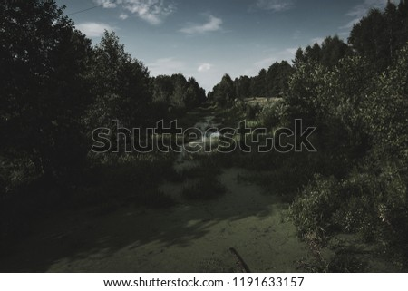 Mystical dark forest. The concept of fantasy, magic background, mysticism. Creative background. #1191633157