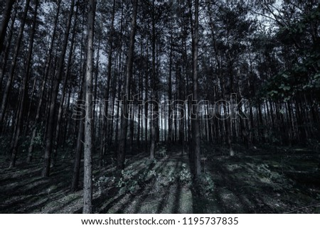 Mystical dark forest. The concept of fantasy, magic background, mysticism. Creative background. #1195737835