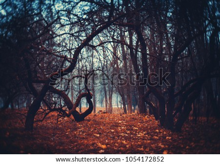 Mystical foggy forest with old trees. Background mystic atmosphere #1054172852