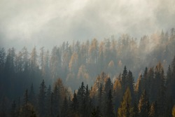 Mystical Forest Italian Dolomites Bolzano