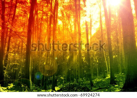 Mystical forest with sun ray