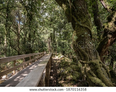 Mystical landscape with a wooden walkway crossing the scene. Trees and stones covered by moss on the Ecovia do Vez.  Arcos de Valdevez, Portugal. Foto d'archivio ©