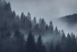 mystical mood over the forest