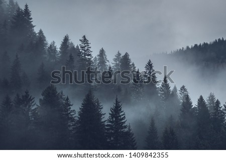 mystical mood over the forest Stock foto ©