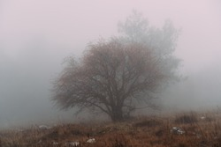 Mystical morning with mist and dew over a tree with red hawthorn berries in the forest. Blurred back focus. Autumn in the forest