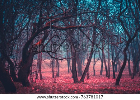 Mystical mysterious forest trees in a fog with red leaves. Stranger forest colorful gradient #763781017