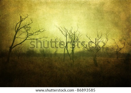 mystical picture of skeletal trees in a marshland processed with a grunge texture