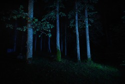 Mystical scary forest at night. Old tall tree trunks illuminated by midnight moonlight, close-up. Dark fairytale. Creepy landscape. Fantasy, environmental conservation theme