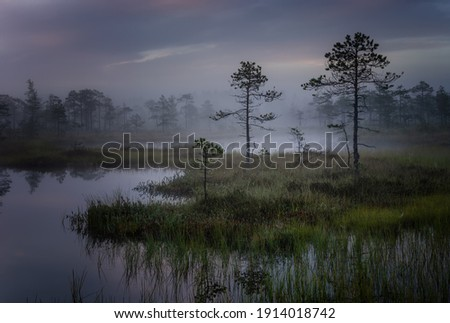 Mystical swamp with pine trees with a reflection in the water on a foggy morning. Foto d'archivio ©
