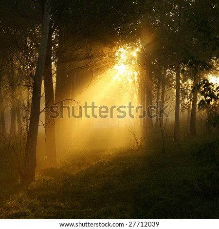 Mystical wood in the foggy morning