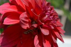 Mythimna separate, the Northern armyworm, oriental armyworm or rice ear-cutting caterpillar, is a moth of the family Noctuidae. Arthropoda  Lepidoptera India spring summer season