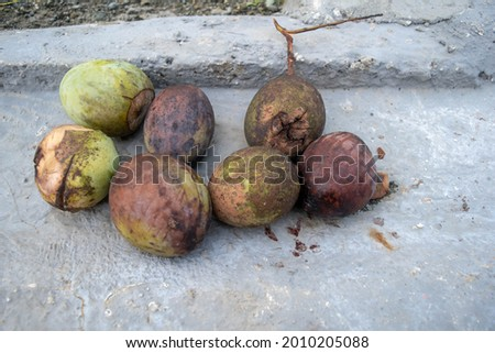 Nabire-Indonesia, July 8, 2021. Mangoes that have begun to foly lying on the floor Stock fotó ©