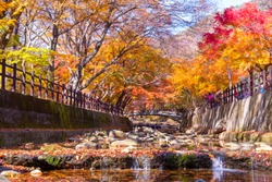 Naejangsan National Park on the most beautiful day of autumn,In the morning and beautiful fog,Colorful autumn season in South Korea