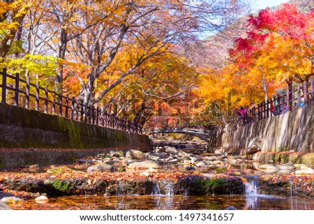 Naejangsan National Park on the most beautiful day of autumn,In the morning and beautiful fog,Colorful autumn season in South Korea #1497341657