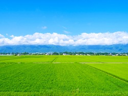 Nagano Prefecture, Japan: View of rice field in the countryside  northern part of Japan in early summer