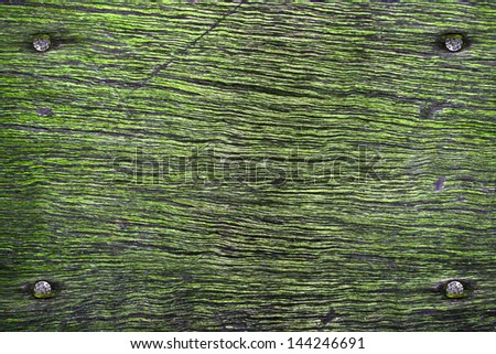 nails in wood with fake moss