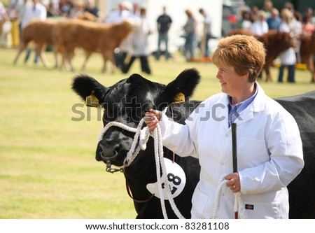 NAIRN, SCOTLAND - 30 JULY: An unidentified farmer displays her cow at the annual Nairnshire Farmers Society show on 30 July, 2011 in Nairn, Scotland.