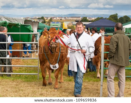 NAIRN, SCOTLAND - JULY 28: An unidentified farmer displays his prize winning cow at the annual Nairnshire Farmers Society show on JULY 28, 2012 in Nairn, Scotland.
