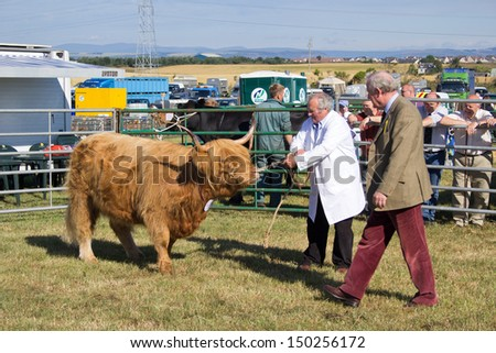 NAIRN, SCOTLAND - JULY 27: Unidentified farmer displays his cattle at the annual Nairnshire Farmers Society show on JULY 27, 2013 in Nairn, Scotland.