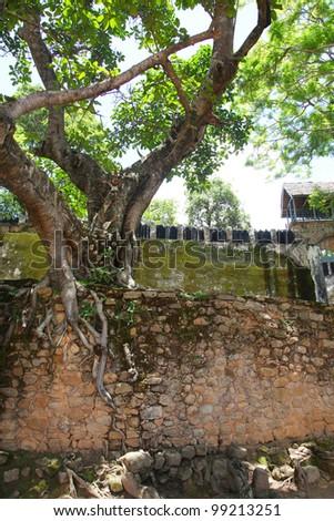 nairobi/wall tree/