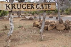 Name sign Kruger gate entrance Kruger National Park, warthogs crossing the road