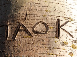 Names carved in tree bark